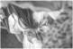 photographe+photo+mariage+sur+le+vif+naturel+aix+en+provence+cannes+toulon+var+bouche+du+rhone+thomas+paulet+ domaine+le+galoupet+cérémonie+laïque+émotion